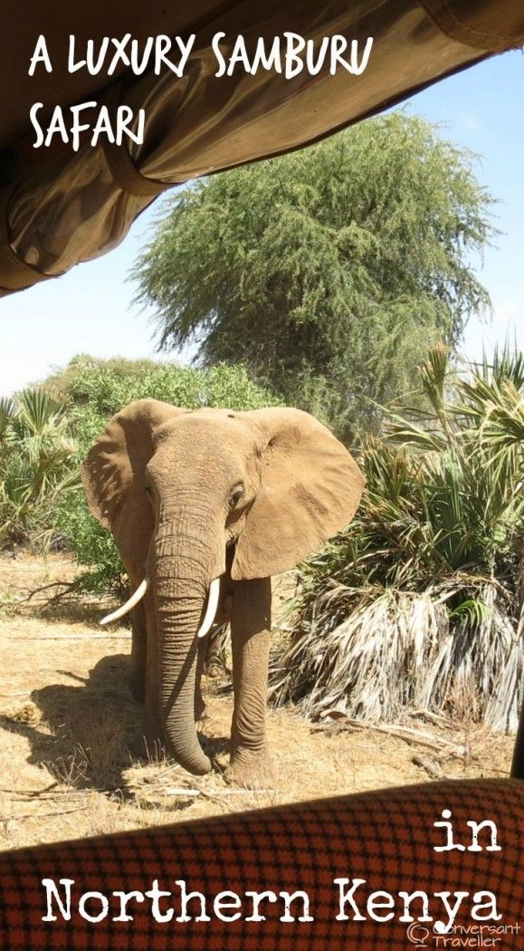 A luxury safari with Saruni Samburu in northern Kenya, in search of the Samburu Special 5