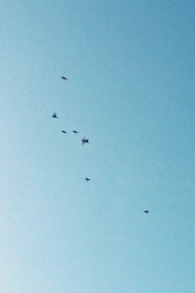 #amazing #bird #photography