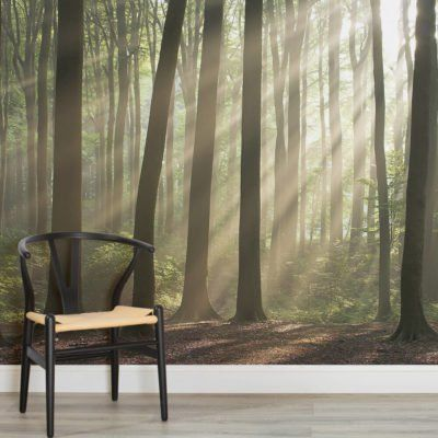 sunshine-rays-forest-square-1-wall-murals