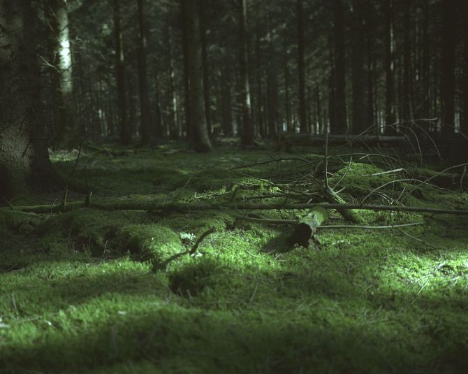 Ode to the Forest - Triin Kerge