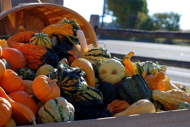 fall harvest, gourds, mini pumpkins, local market, Whittamore Farm