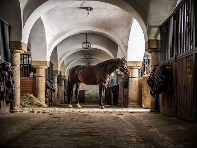 www.pegasebuzz.com | Equestrian Photography : Bagienec Stables by Portsmouth Photography