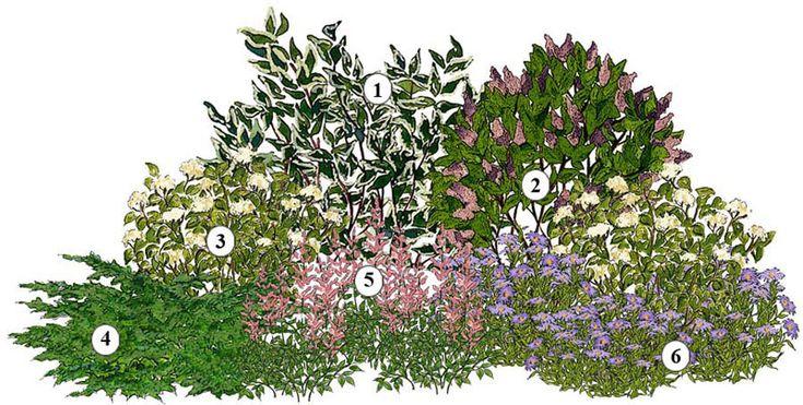 1. Cornus alba 2. Syringa Hybr. 3. Hydrangea arborescens 4. Juniperus virginiana 5. Astilbe Hybr.