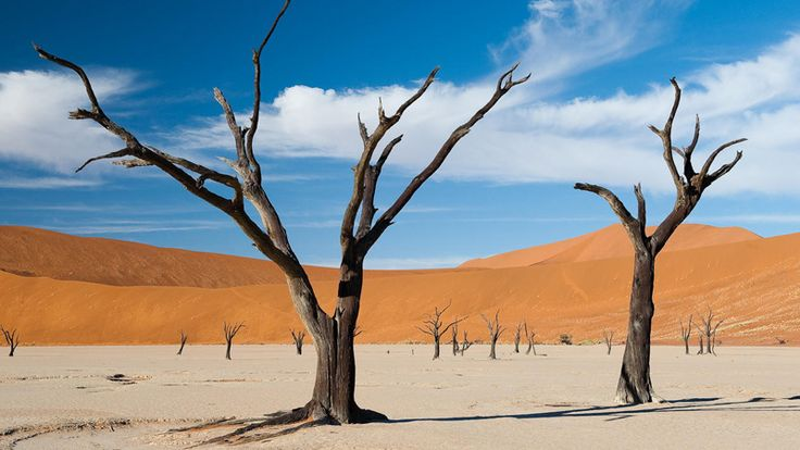 See the Deadvlei, Sossusvlei, Namibia with Ker & Downey Africa #luxurytravel #namibia