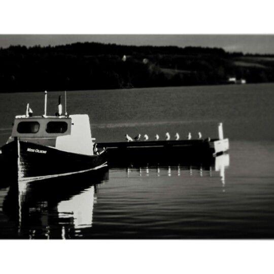 Nautical seagulls in monochrome