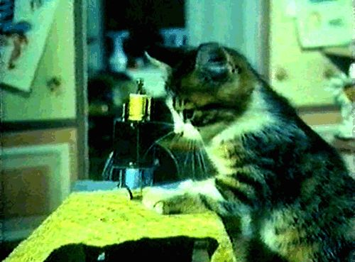 kitty be sewing from Cats & Dogs on tumblr