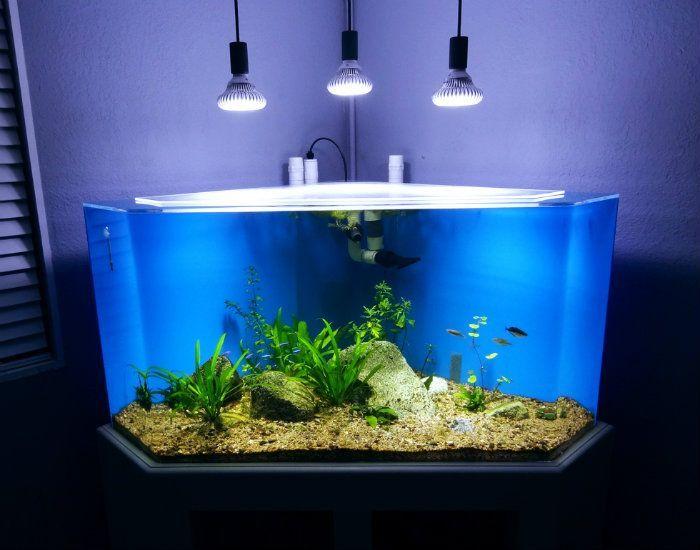 Image result for 100 gallon corner aquarium   Tank ideas