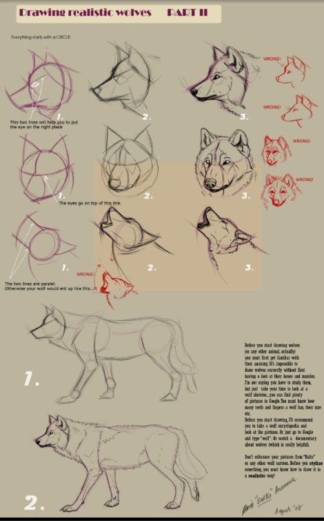 # how to draw a wolfe