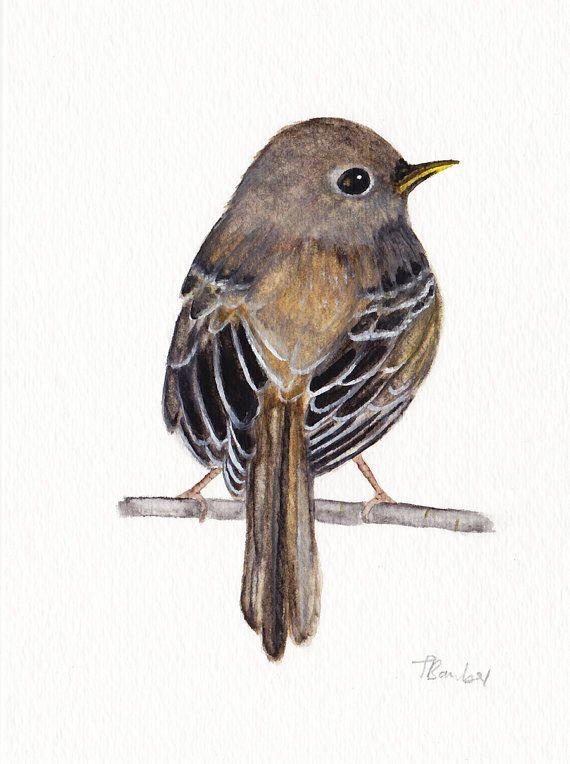 Flycatcher bird #Original #watercolor painting