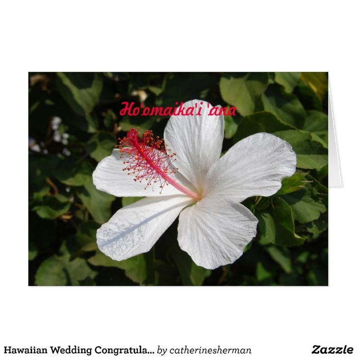 77 Best Hawaiian Birthday Greetings Images On Pinterest