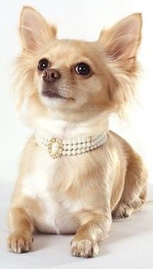 Pearls are a necessity! ✿⊱╮