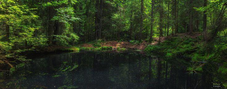 Tăul Negru, lacul din mijlocul pădurii de conifere   Bihor in imagini
