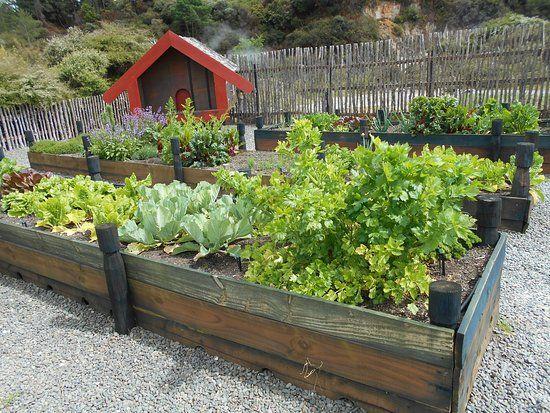 Image result for traditional maori kai gardening