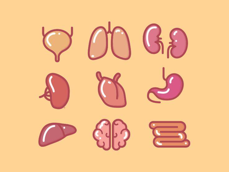 Organs by Viviane Valenta