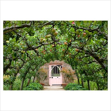 Apples growing in the Walled Garden, Highgrove Garden,