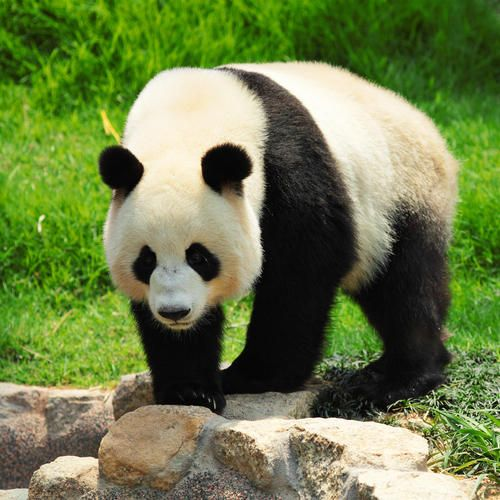 Species   Protecting Wildlife   World Wildlife Fund