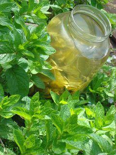 menta-citromfű-bodza-bármiital