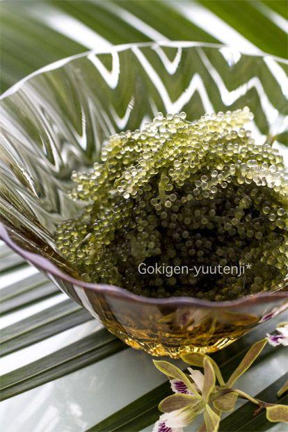 sea grapes 海ぶどう   Okinawa 沖縄   Pinterest