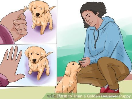 Image titled Train a Golden Retriever Puppy Step 1