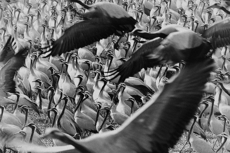 The elegant crowd Wildlife Photographer of the Year National History Museum Admission: £14 (inc. small voluntary donation) price without donation £12.60 Offer Times: Monday - Friday (10.00 - 17.15) WEEKDAYS ONLY