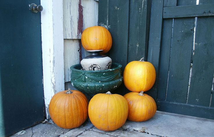 Äpfel und Birnen vorsichtig pflücken und im kühlen Keller in Kisten oder auf speziellen Regalen lagern. Selbstversorgergarten im Oktober.