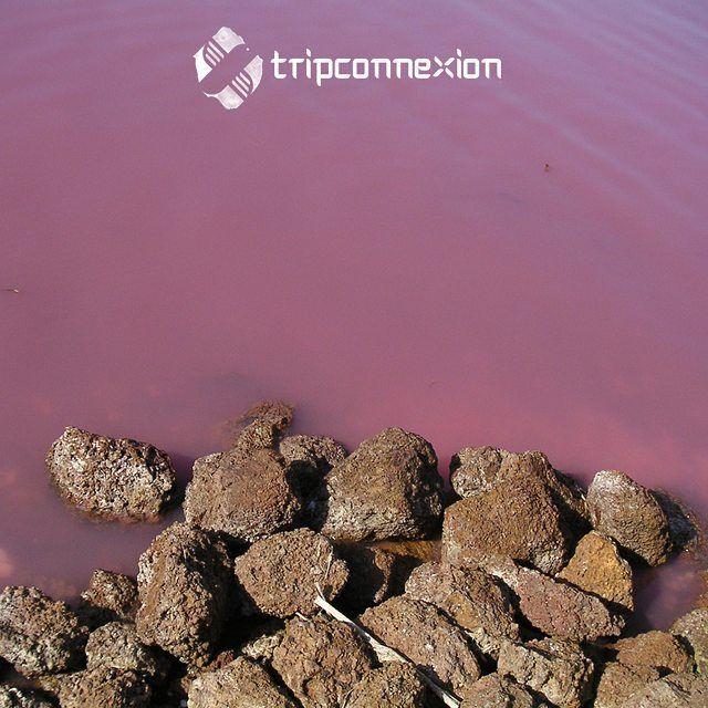 On trouve de nombreux lacs roses dans le monde comme le célèbre lac Hilliers en Australie. Mais savez-vous dans quels autres pays peut-on trouver ces eaux colorées? #pink #lake #travel #travelling #voyage #tripconnexion #followme #picoftheday #photooftheday #igers #instago #instalike #instadaily #instatravel #instacool #instatravelling