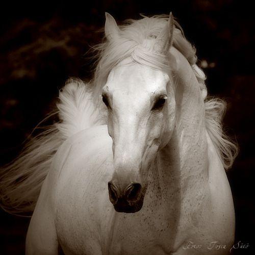<3: Beautiful Horses, Animals, Equine, White Horses, Beauty, Photo