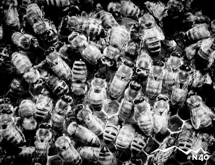 beehive great falls mt