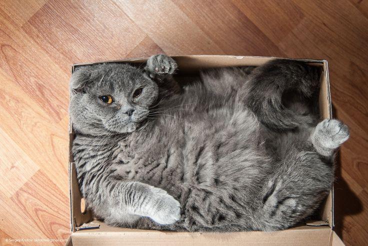 A boxful of cat