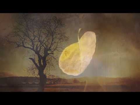 """Poetry Movie Day – POEM #1: Watch """"I Am the Imaginary Tree of Light"""" 