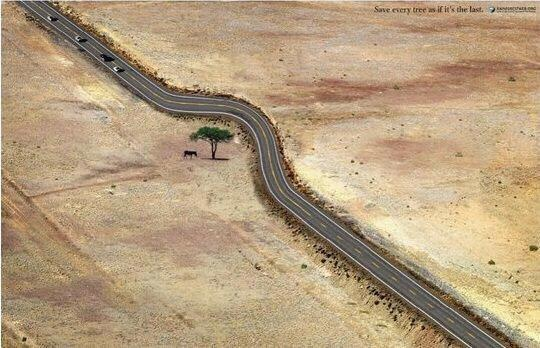 Save Even A Single Tree If You Can....