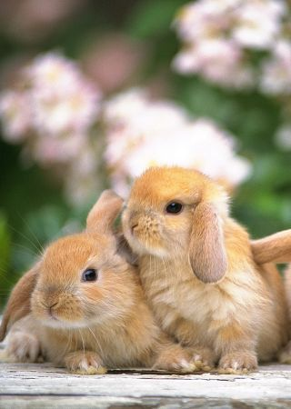 Bunnies x
