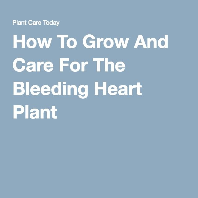 How To Grow And Care For The Bleeding Heart Plant -