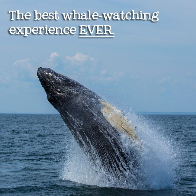 We've been whale-watching around the globe, and our experience on Grand Manan Island in New Brunswick was by far the most spectacular.
