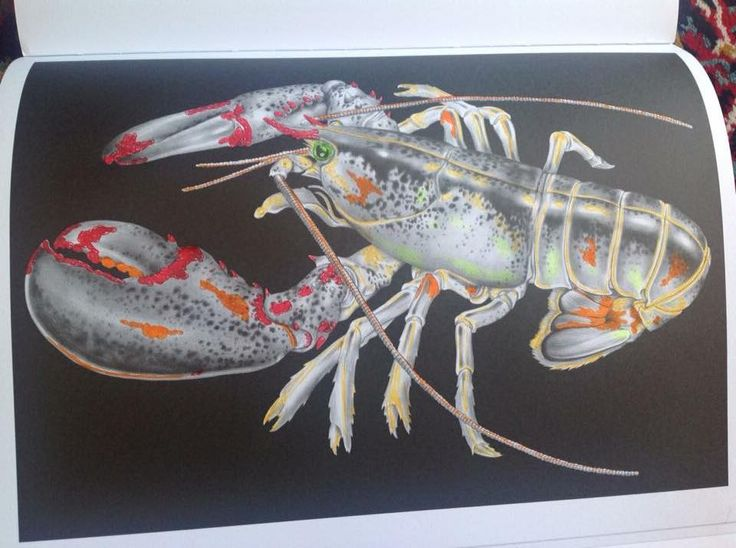 Maine Lobster By Susan Lowe Coloring BooksAdult