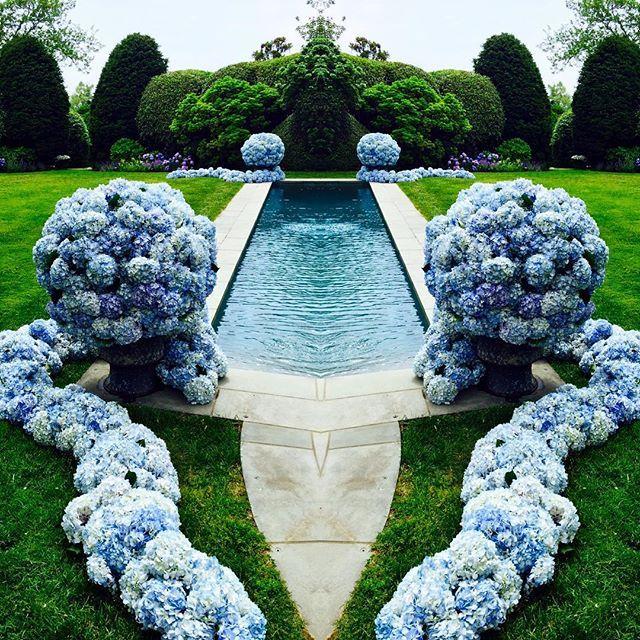 Hydrangea - Blue Flowers #TeamLeatham