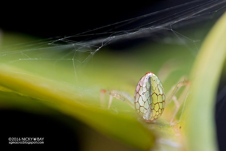 Photographer Nicky Bay Documents Mirror Spiders Adjusting their Silver Plates to…
