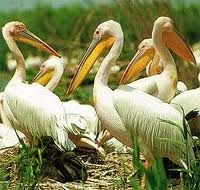 Wildlife in Danube Delta , Romania