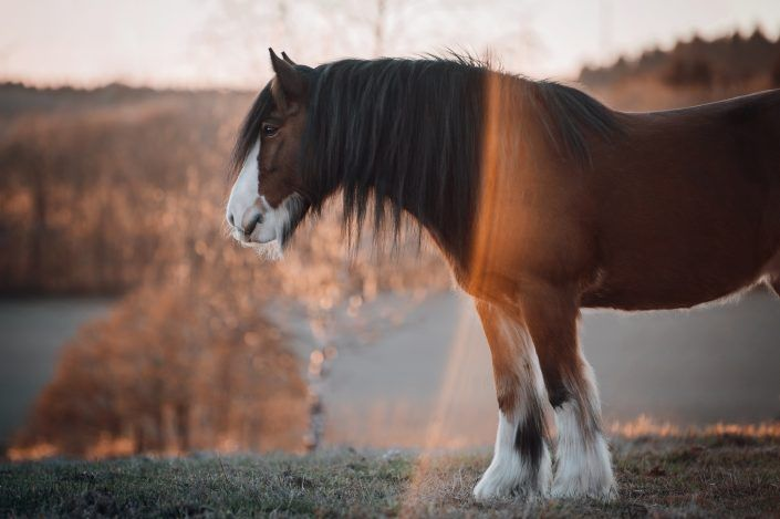 Fotos Pferde In Der Natur I In 2020 Beautiful Horse Pictures