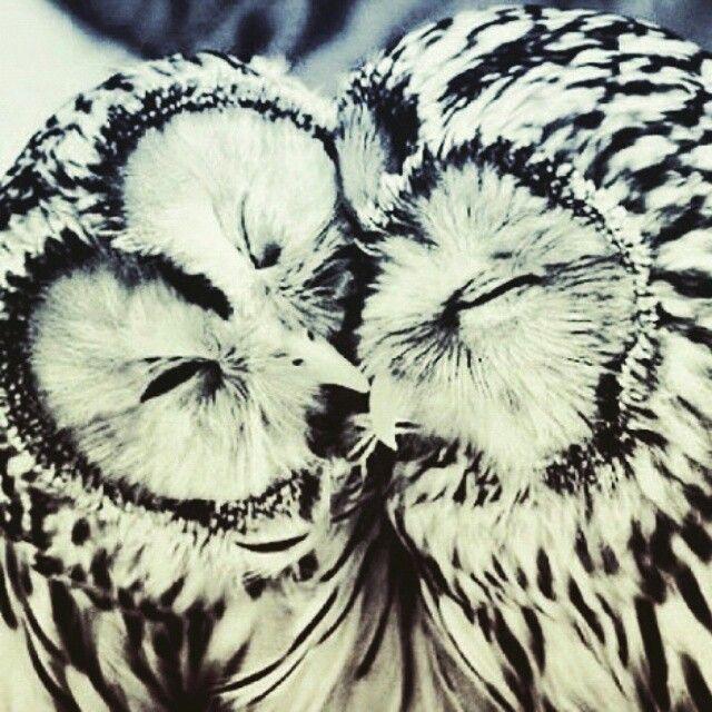 Os ouvidos da coruja são 50 vezes mais sensíveis do que os ouvidos humanos, mas suas orelhas raramente são protuberantes ou fáceis de serem vistas, como na imagem acima. As orelhas desses animais são diferentes: enquanto a orelha esquerda é inclinada para baixo para captar sons vindos de baixo, a direita é voltada apenas para captar sons vindos de cima. É por isso que elas conseguem captar até mesmo os chiados mais sutis.