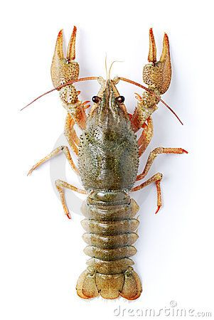 9 best structure of life foss science grade 3 images on pinterest crayfish fyi inherits traits from its parents such as the number of legs it has fandeluxe Image collections