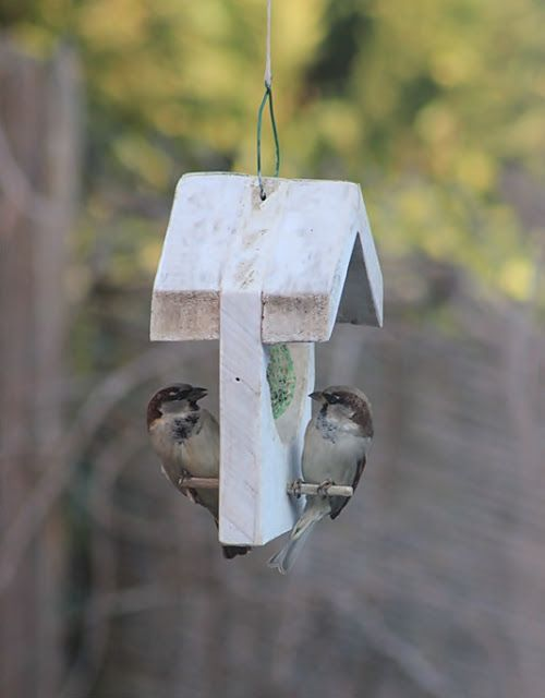 220 best for the birds images on pinterest for the for Whole coconut bird feeders