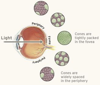 seeing bugs in peripheral vision