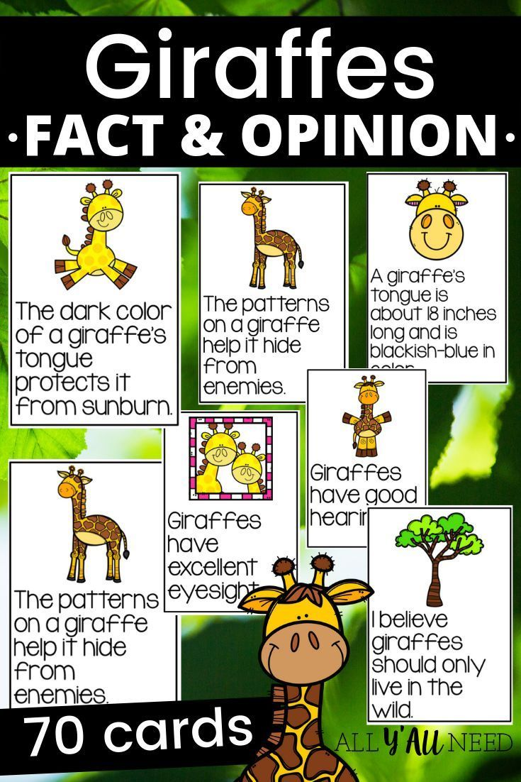 Giraffes Fact And Opinion Fact And Opinion Giraffe Lessons Giraffe Facts [ 1102 x 735 Pixel ]