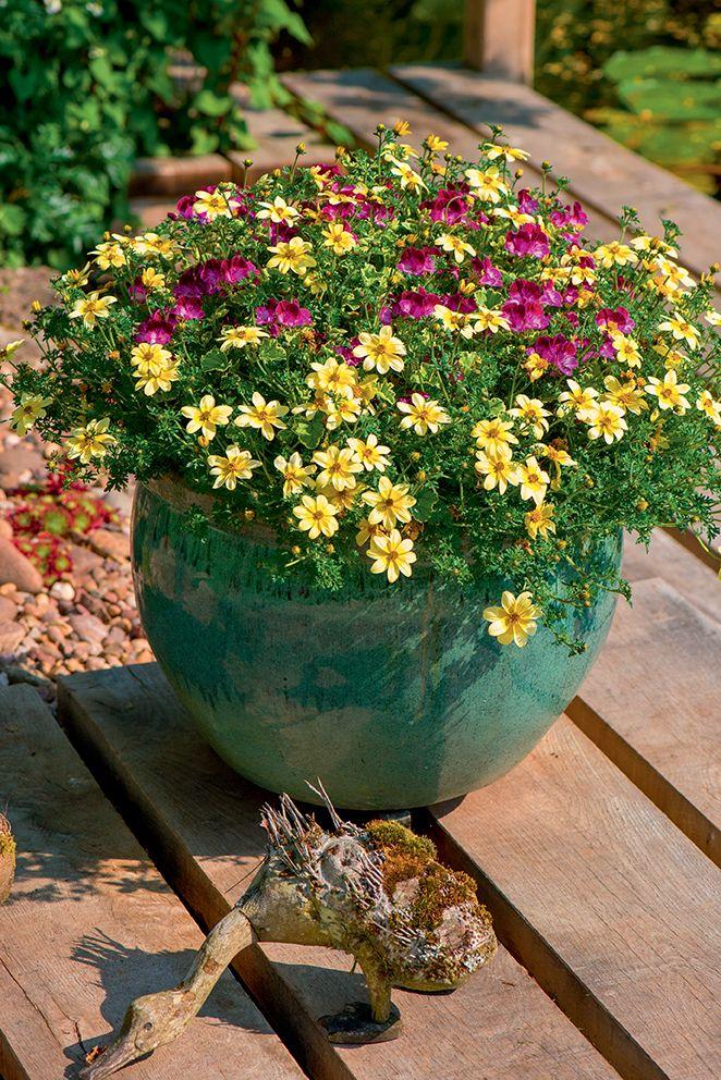 fleurs terrasse fleurs fleur jardiniere