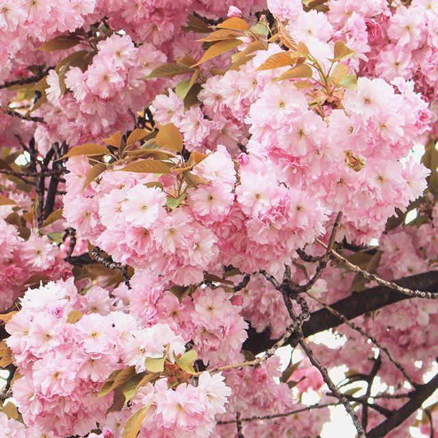Happy Easter! 🌸🐰🐣 #spring  #springishere #blossom #nature #naturelover #easter #naturephotography #naturelovers #naturegram #followforfollow #like4like #follow4follow #likeforlike #vsco #vscocam #mik #instadaily #instagood #instaphoto #photoofday #photography #flowers #flowerpower #topnature #topnaturephoto #cherryblossom #vscohun #vscohungary