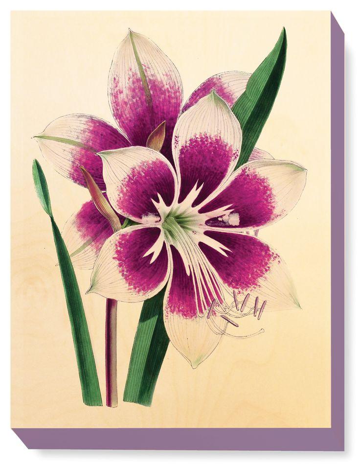 FLW 025 Vintage Flower illustration