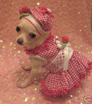 Cherry Dog Dress Set Chihuahua Clothes