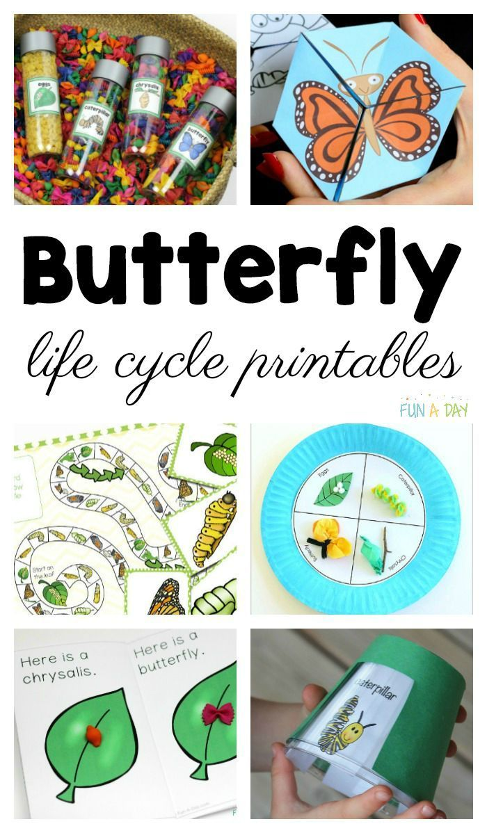 Life Cycle Of A Butterfly Printables To Use With Your Students Fun A Day Butterfly Science Activities Life Cycles Preschool Learning Activities [ 1198 x 700 Pixel ]