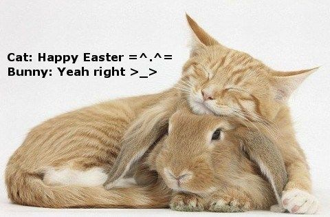 Funny Happy Easter Bunny | Cats and Bunnies are Easter friends.